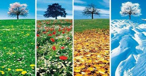 Resultado de imagem para a vida e as estações