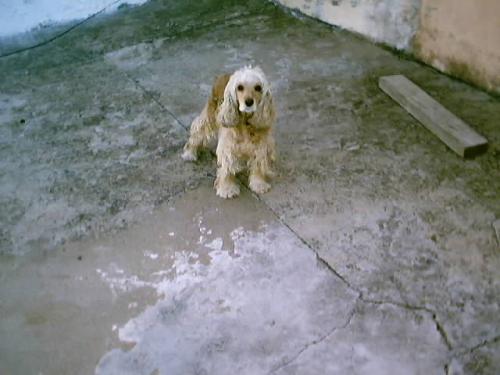 Esta era Priscila, de todas animais que tive esta foi a que mais gostei.
