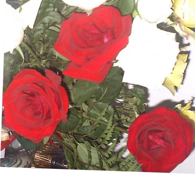 FOTO TIRADA POR BÁRBARA MARIA 24/02/2011