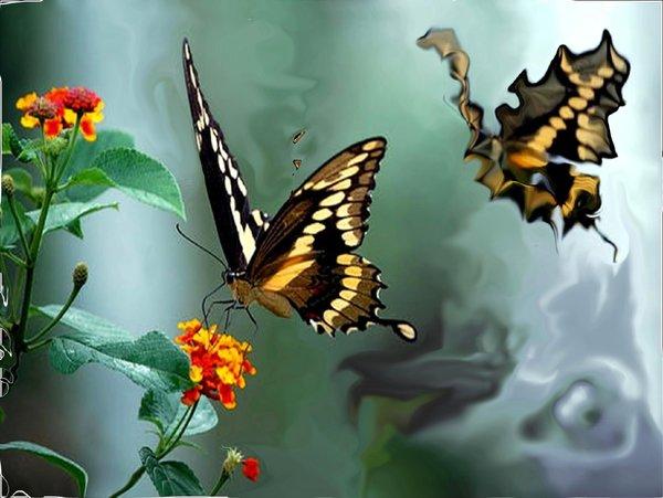 A alma é uma borboleta: acreditamos, viajamos,criamos, voamos... Vivemos em uma constante metamorfose! (Foto:Google-Montagem:Roangas)