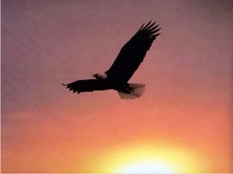 águias Voam Sempre A Favor Do Vento