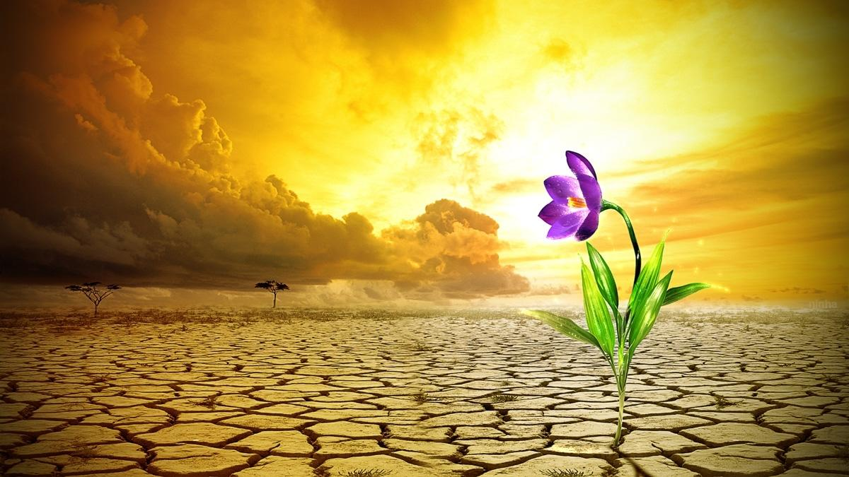 Todo Deserto Tem Um Oasis E Todo Oasis Tem Uma Flor