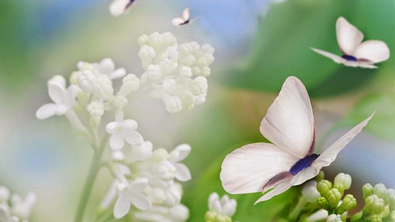 delicadeza gentileza e ternura