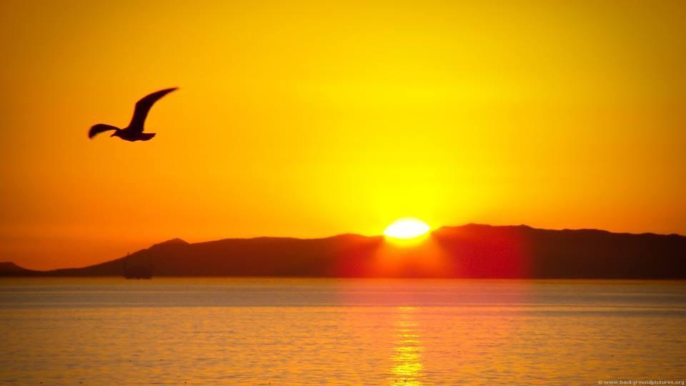 Resultado de imagem para sol nascente